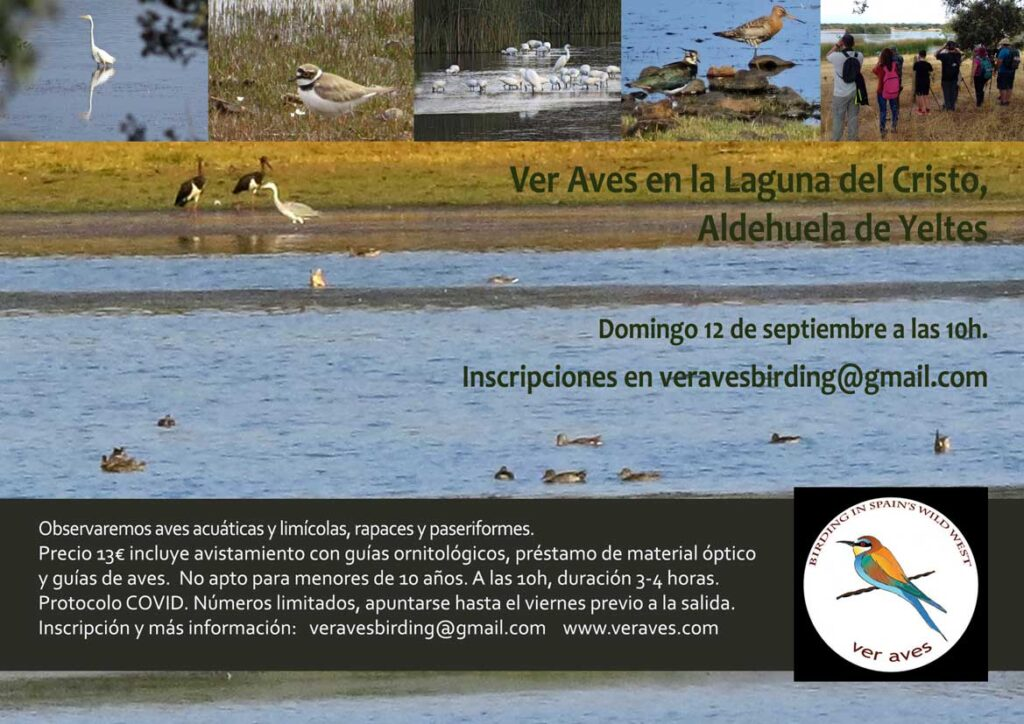Aves-de-humedales-Ver-Aves-