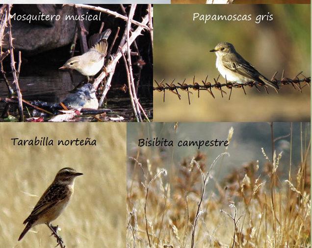 Rutas para ver aves migratorias. Septiembre 2019