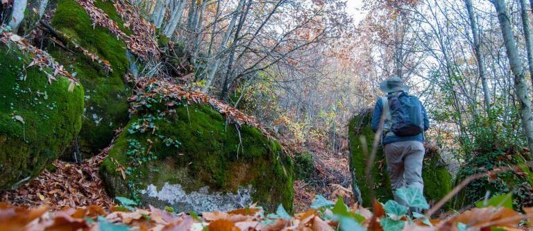 Sendero Micológico entre montemayor del río y El Cerro