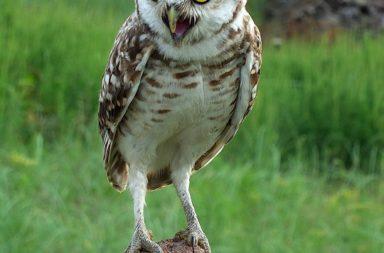 Ruta para Ves Aves en Cespedosa de Tormes