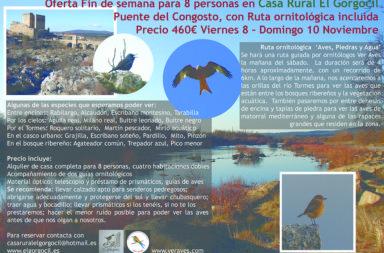 bird_gorgocil_turismoentresierras.jpg