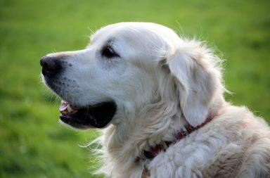 Campeonato N. C. E. Perro de Pastor del Cáucaso y de Perros de Seguridad ARES España