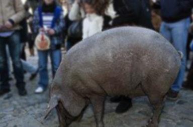 cerdo_san_anton_turismoentresierras.jpg