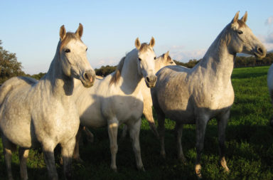 feria-caballo-agosto-piedrahita-sierra-gredos
