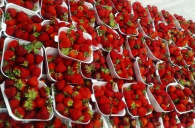 fresas20linares-turismoentresierras.jpg