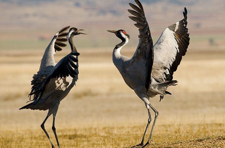 Atardecer con Grullas el 18 y 26 de enero con Ver Aves