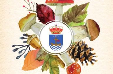 Noviembre Micológico en Barco de Ávila
