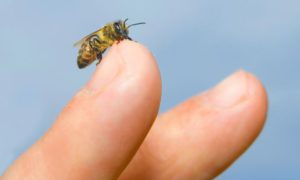 ¡ATENCIÓN!: Recomendaciones para baños en ríos y piscinas naturales: Picaduras de mosquitos, hormigas y avispas.