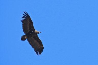 Programación Rutas ornitológicas Ver Aves Birding