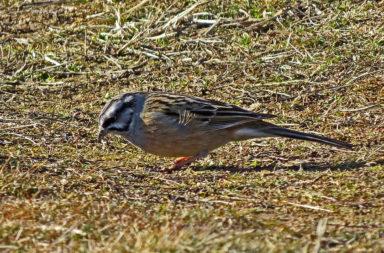 Ruta ornitológica guiada para celebrar el Día Mundial de las Aves